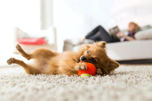 Giochi da fare con il cane