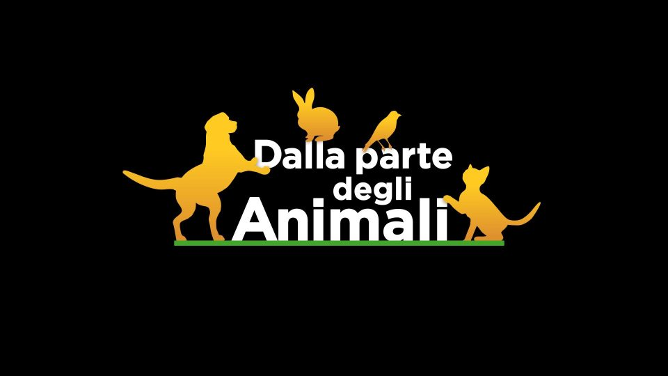 Animali in televisione
