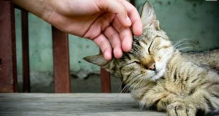 Cosa dare da mangiare al gatto