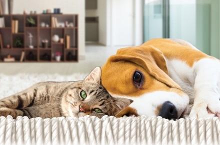 Quattro zampe la prima rivista per conoscere cani e gatti for Punture pulci