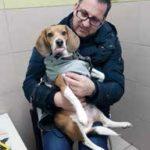 Beagle di Green Hill