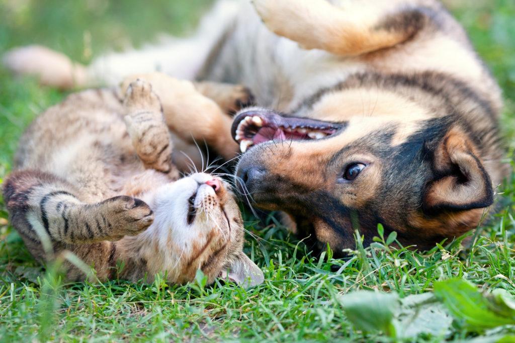 antiparassitario cani gatti