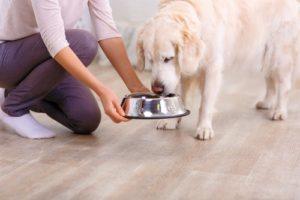 cosa dare da mangiare a un cucciolo