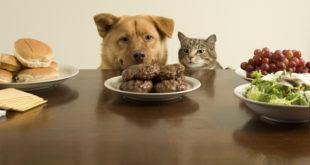 alimentazione sana cani gatti