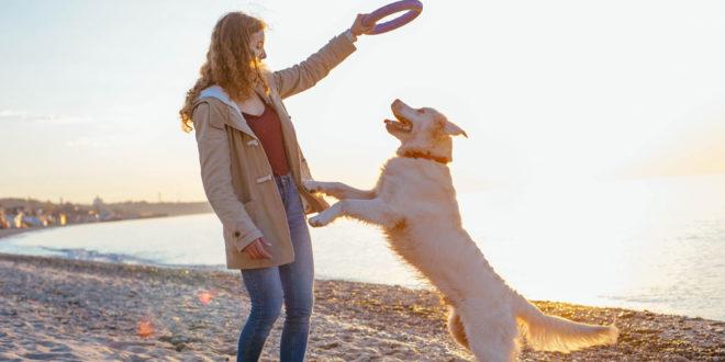 gioco educativo cane puller fortesan