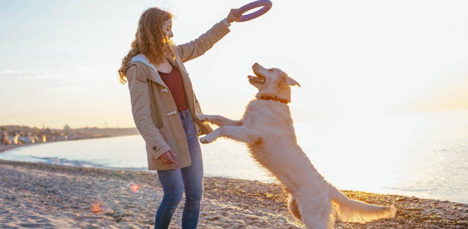Giochi Per Cani Allaperto Puller Quattro Zampe