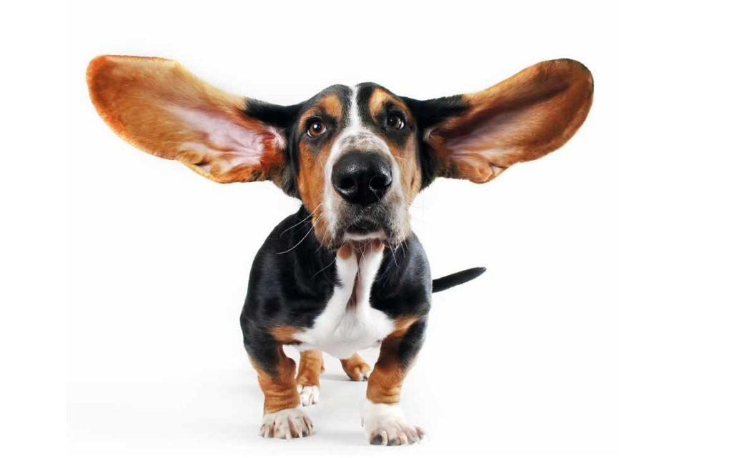 Il cane ha paura dei rumori