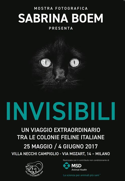 Invisibili, la mostra fotografica milanese sui felini