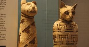 mummie gatto napoli