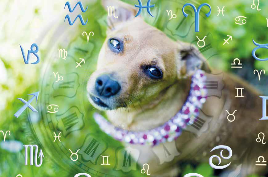 oroscopo animali domestici