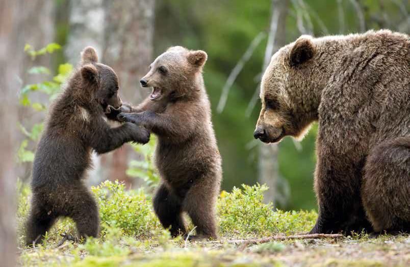 orso di primavera
