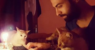 pianista turco salva 9 gatti