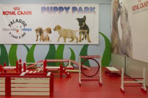 puppy park dog day