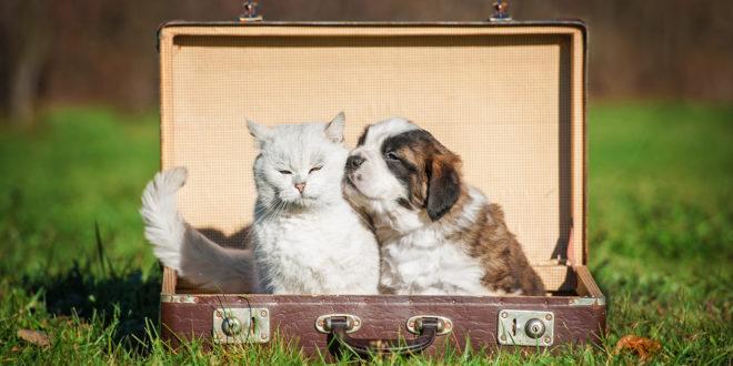 agriturismi pet friendly