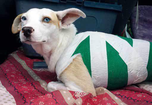 camilla, adozione cane