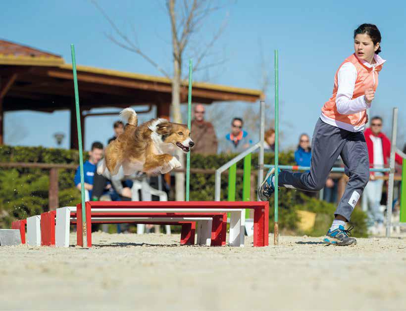 campionato agility