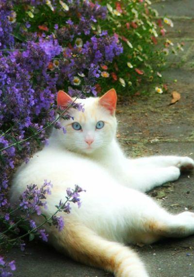 cat in paradise