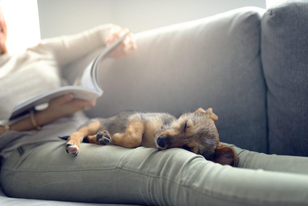 cuccia riscaldante rinfrescante cani gatti