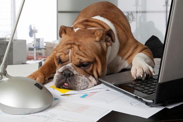 cane lavoro casa