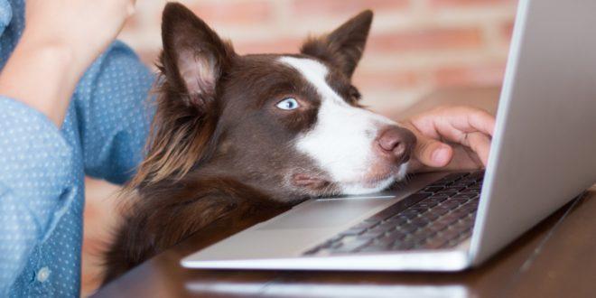 lavorare con il cane