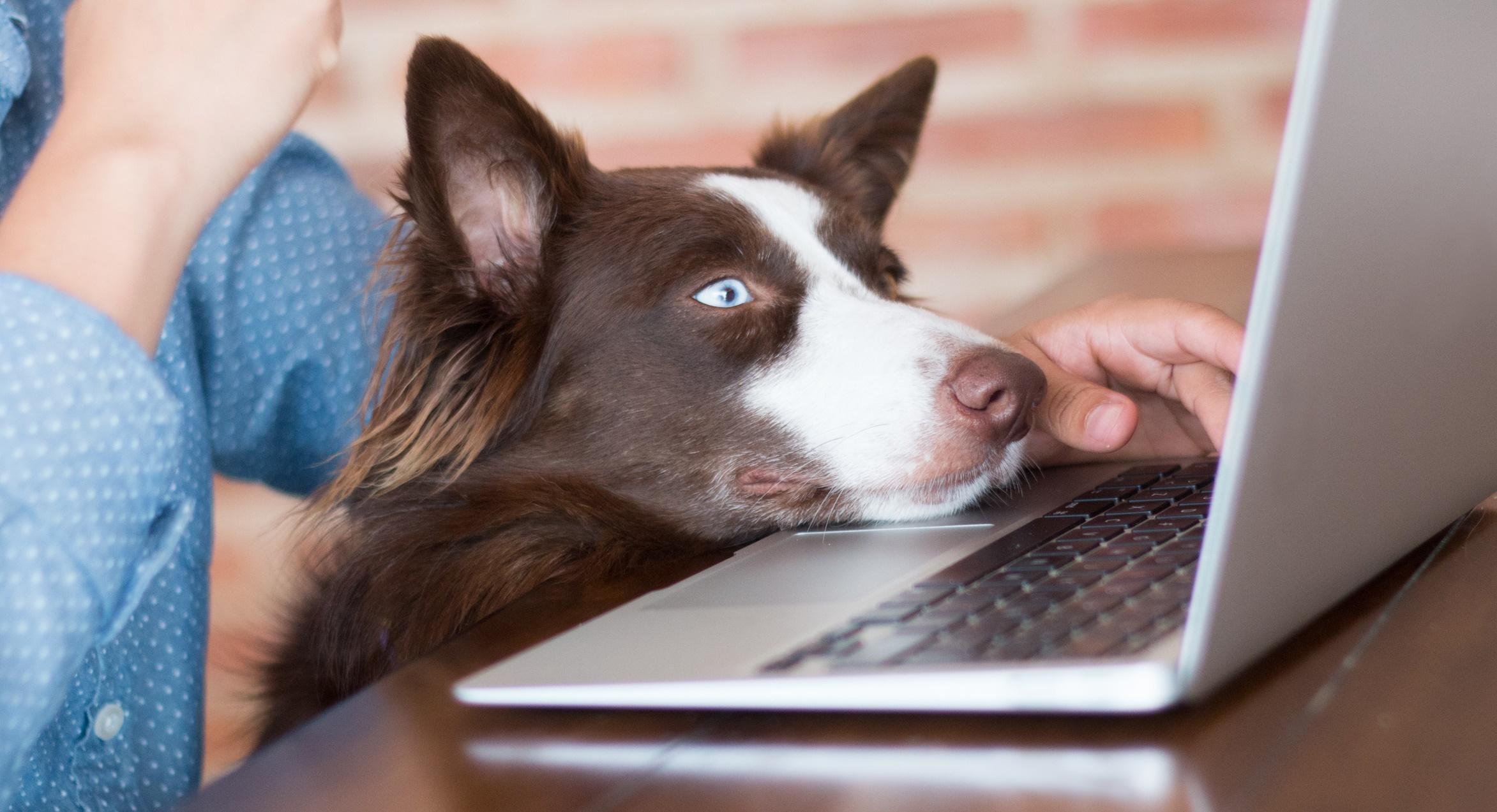 Lavorare in casa con il cane quattro zampe for Lavorare con i cani