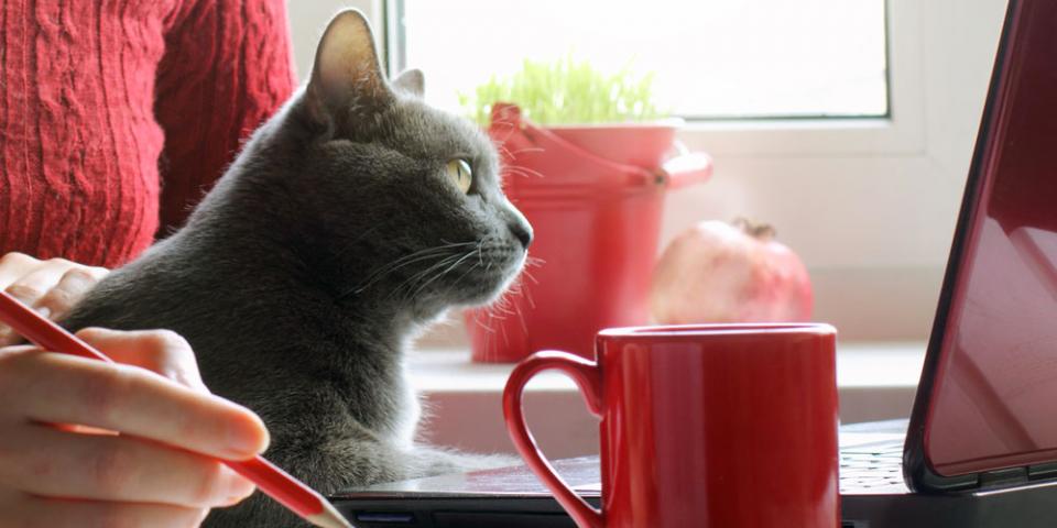gatti in casa