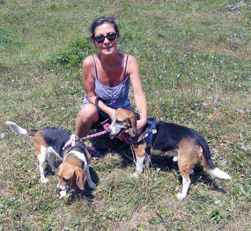lillo beagle