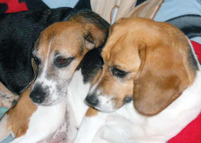 beagle sperimentazione