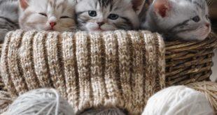socializzazione gatti