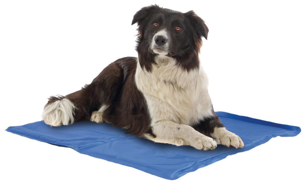 Cani sempre al fresco con i prodotti fresh quattro zampe - Tappetino riscaldante per cani ...