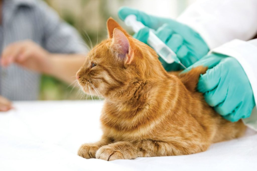 vaccino gatti