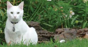 dermatite gatti sintomi cause