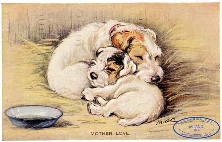 cani in cartolina