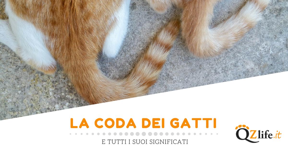 Coda del gatto 10 significati da interpretare quattro zampe for La coda del gatto