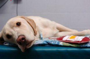 donazioni sangue cani