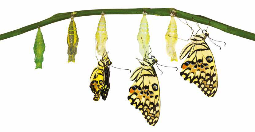 farfalle di luce