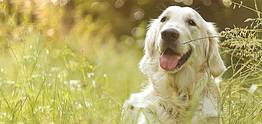 forasacco cane sintomi