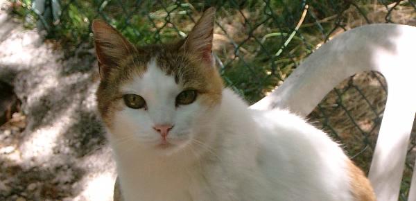 Gatti abbandonati le 5 regole da seguire per aiutarli for Allontanare i gatti