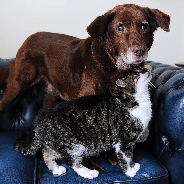 gatti coraggiosi