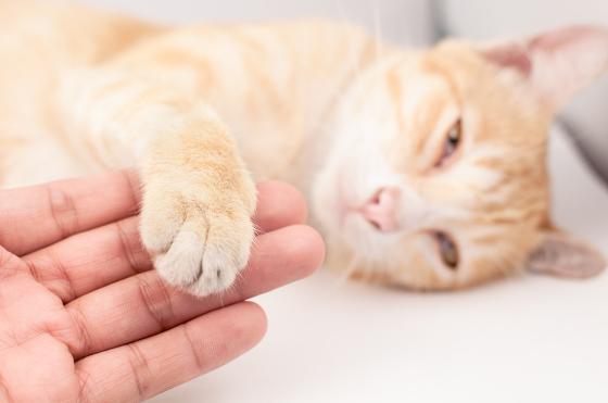 gatti sono affettuosi