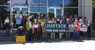 giustizia per i gatti