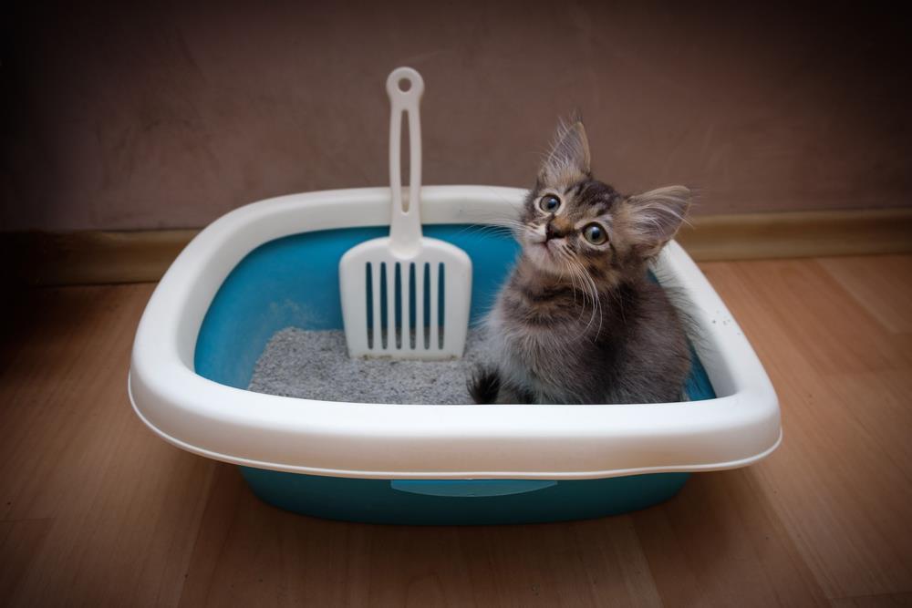lettiera gatti
