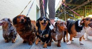 luoghi comuni cani