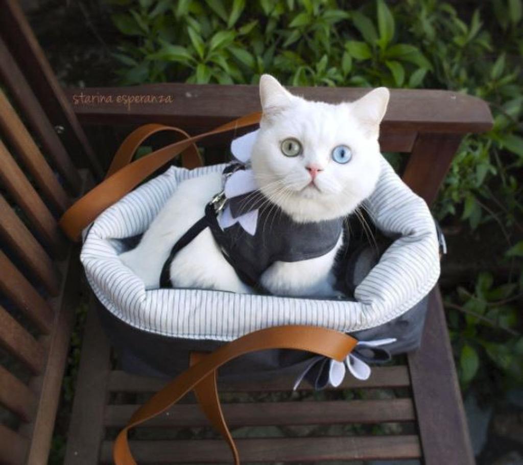 gatto in borsa