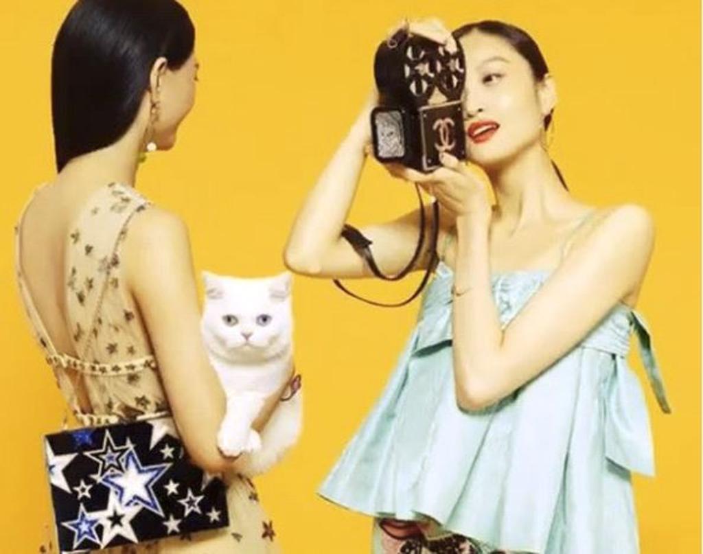 spot pubblicità gatto