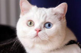 starina gatto