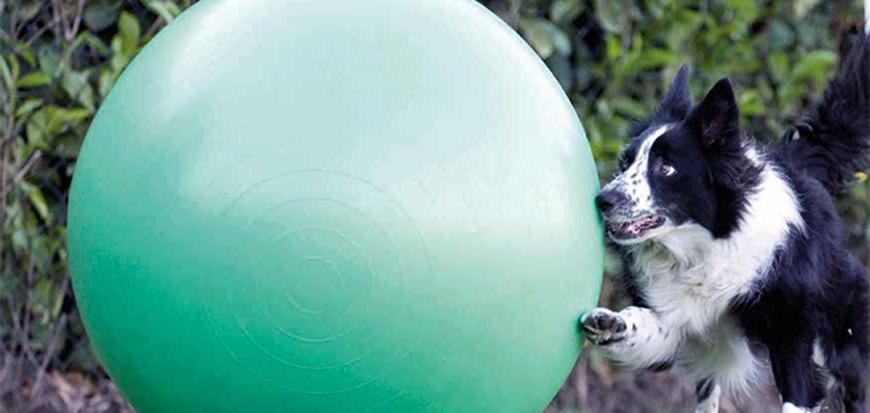 treiball cani