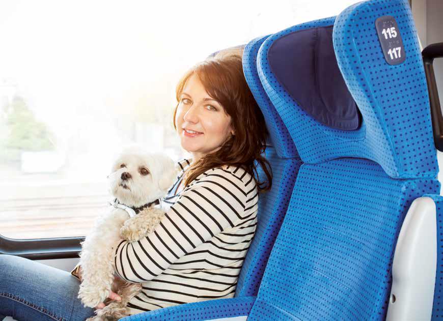 viaggiare cane gatto