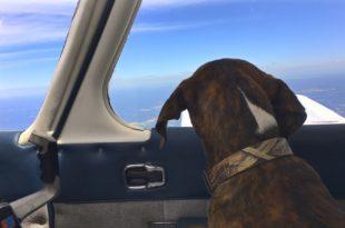 voli contro l'eutanasia