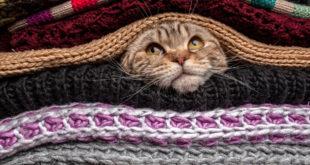 gatto tra le coperte